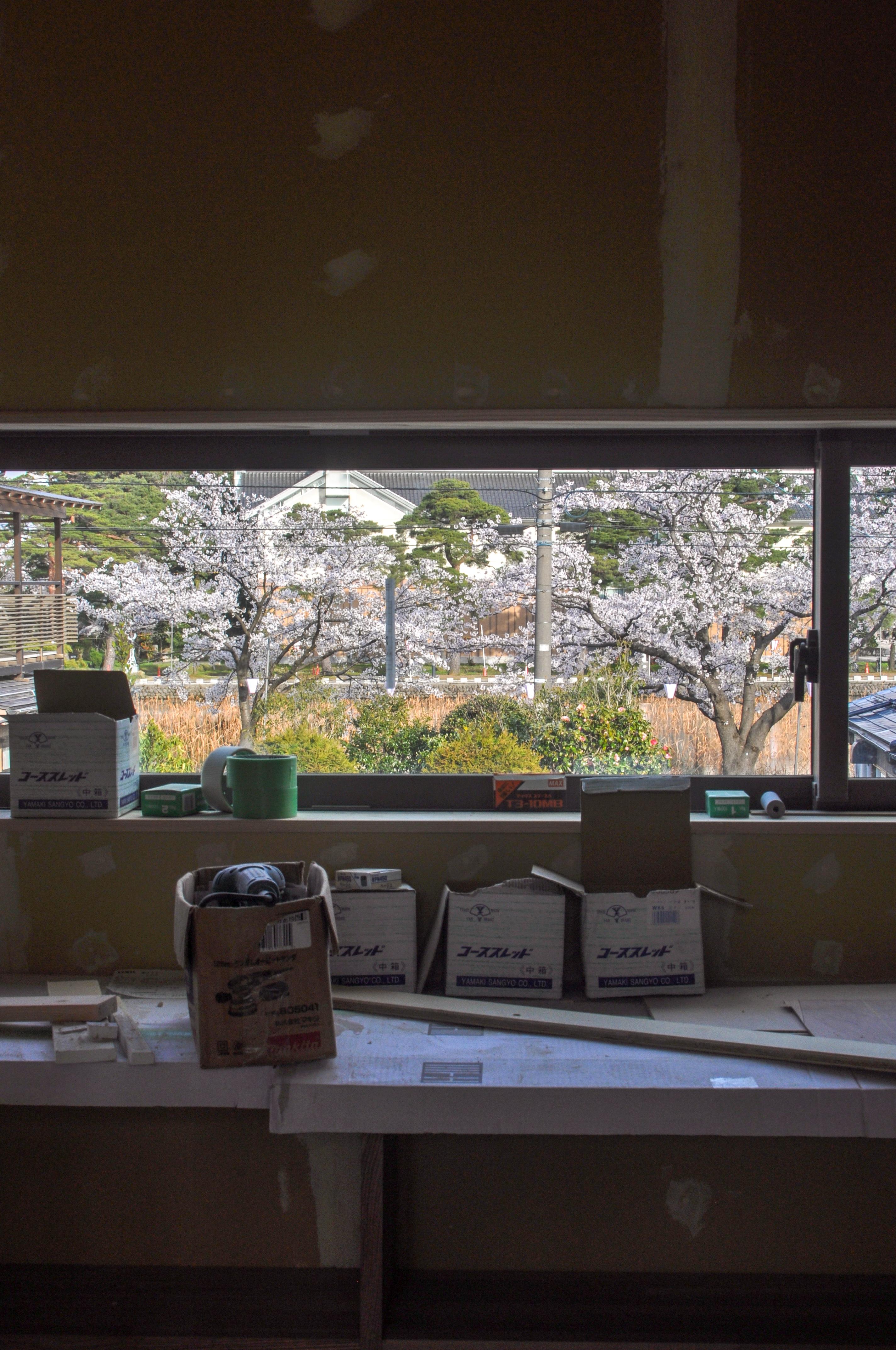 上越高田の桜